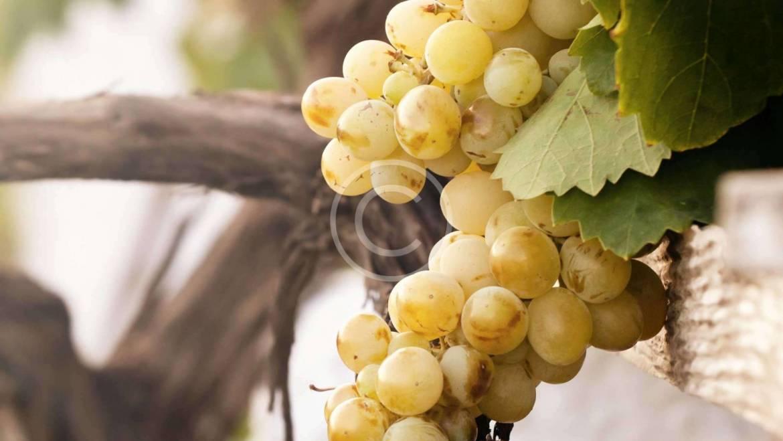 Burgundy Wine Region of Eastern France
